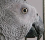 كاسكو-چشم ها