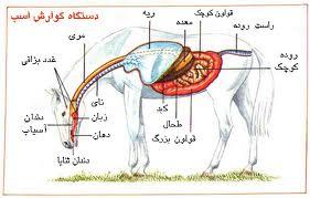 گوارش اسب