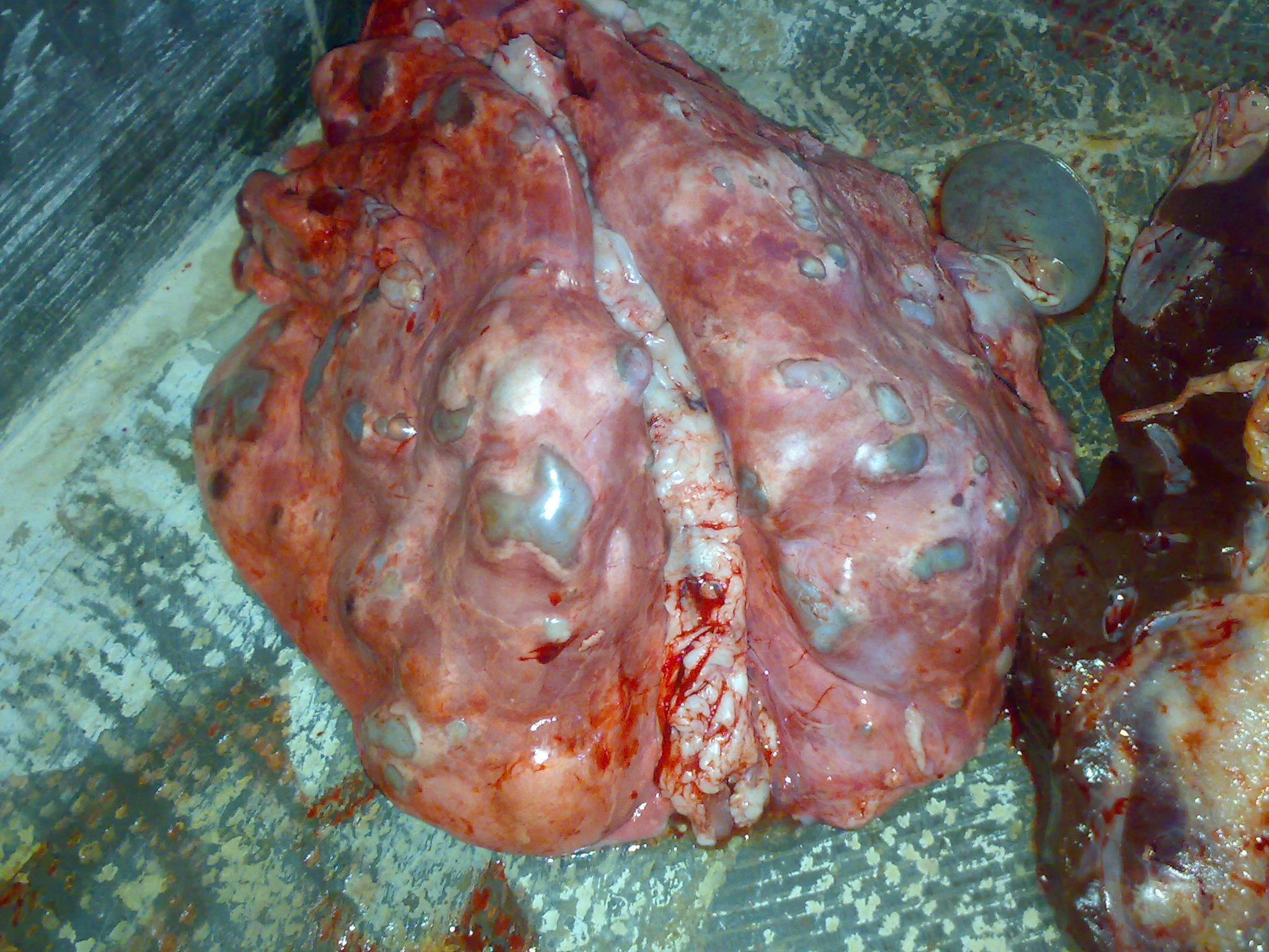 خوردن سر انسان ها توسط  بیماری کیست هیداتید « کلینیک دامپزشکی دکتر وت