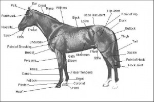 ch-exp-horse